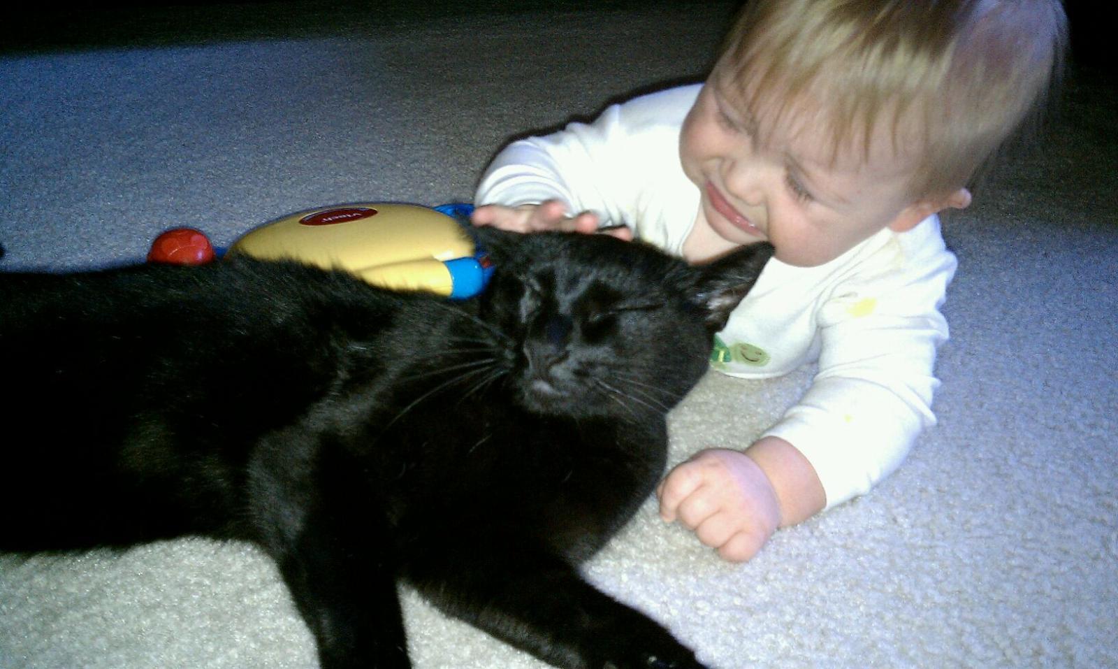 Cat Cataract Natural Treatment